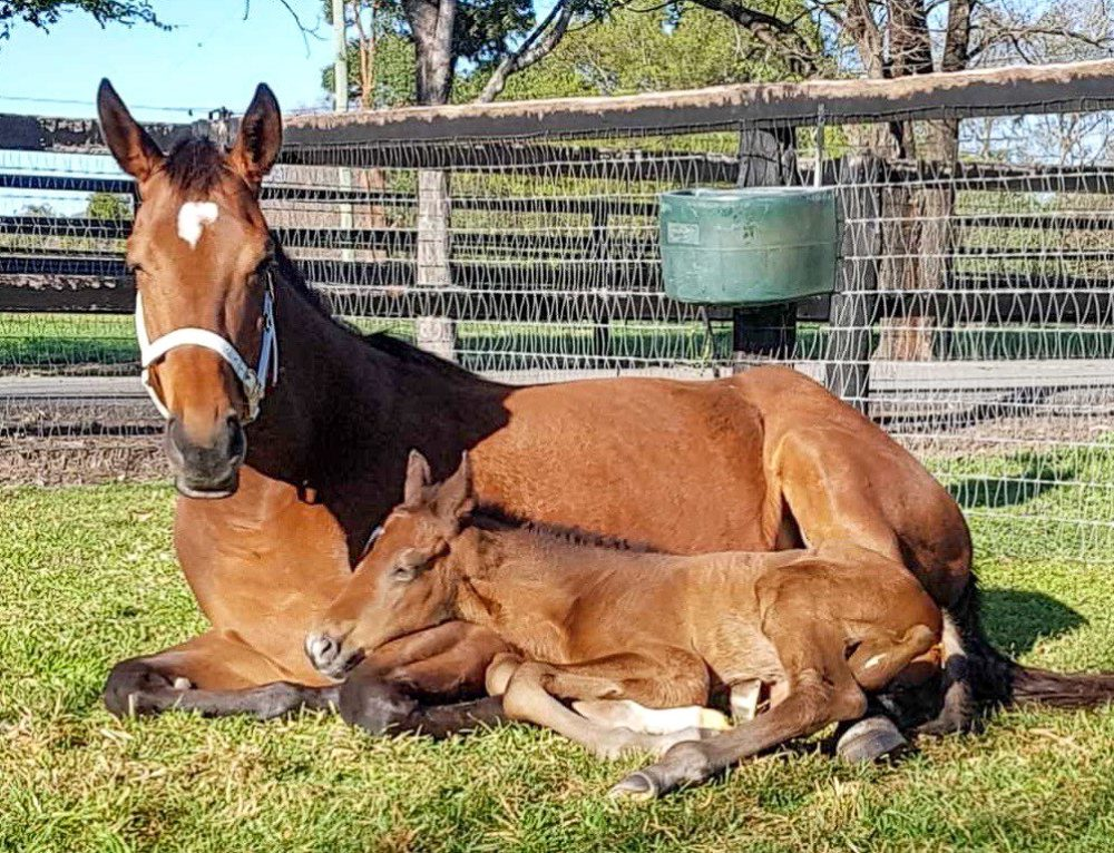 Equine Reproduction: Getting Your Mare In Foal