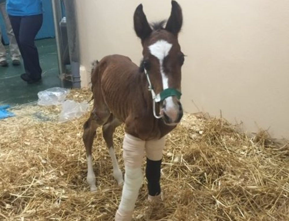 Equine Reproduction: Foal Neonatal Care