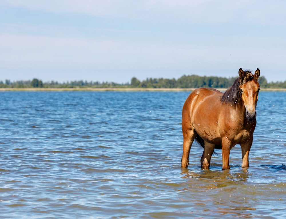 10 Summer Health Problems for Horses