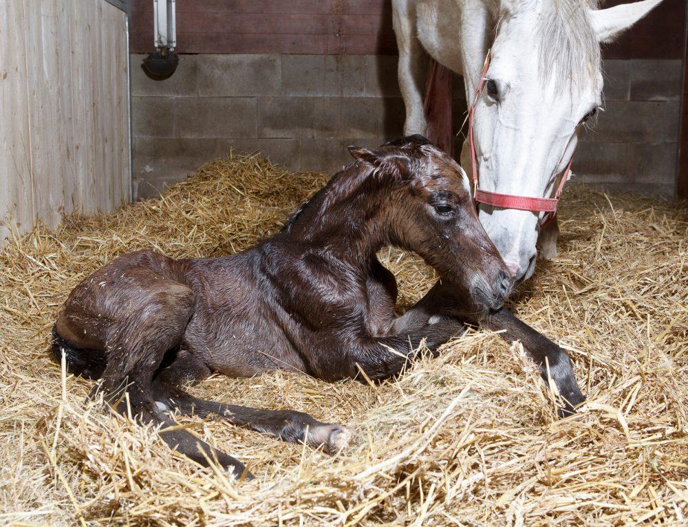 Pre-mature Foal