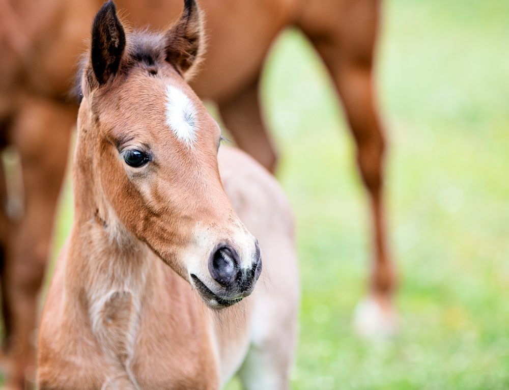 When should I vaccinate my foal?