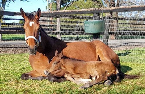 Mare and foal 6-2